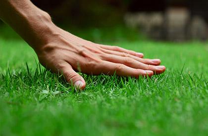 starostlivost o travnik