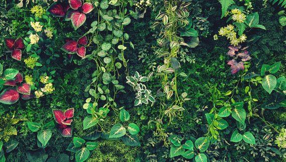 vertikálna záhrada